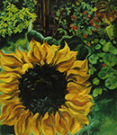 Sunflower 1996